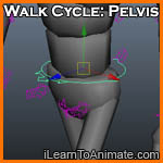 Walk Cycle: Pelvis